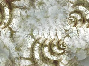 Cymbient – Arced